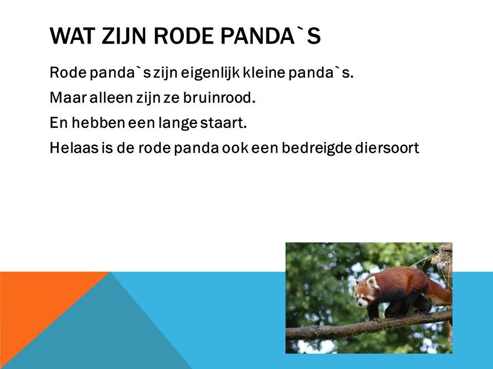 Wat zijn rode panda`s