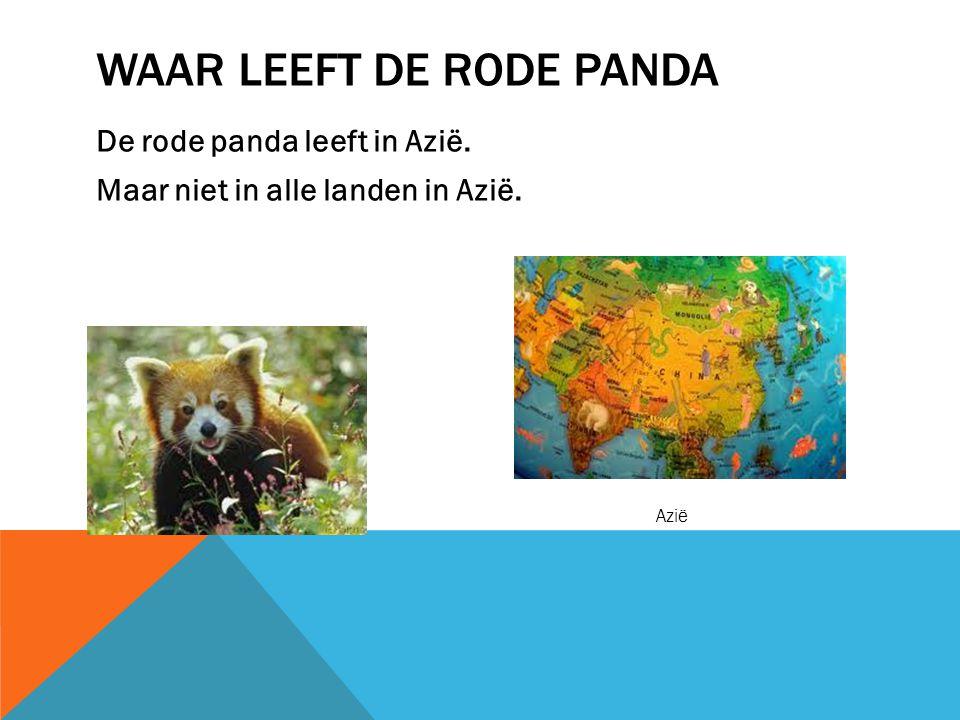 Waar leeft de rode panda