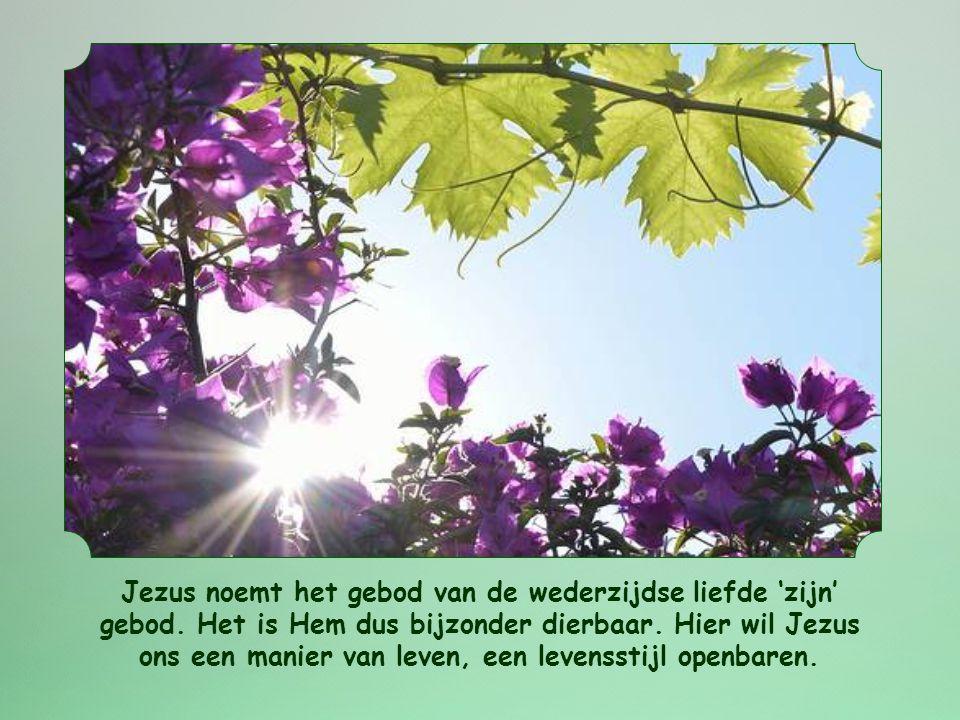 Jezus noemt het gebod van de wederzijdse liefde 'zijn' gebod