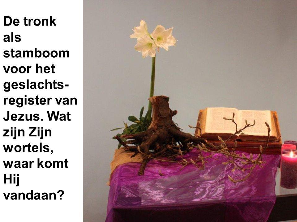 De tronk als stamboom voor het geslachts- register van Jezus