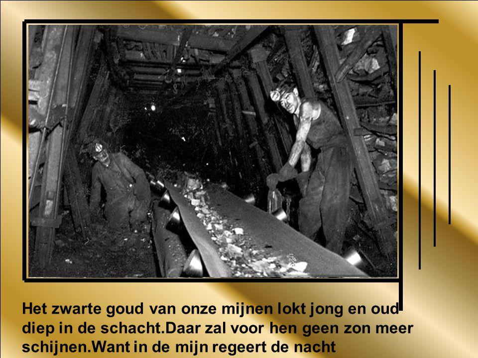 Het zwarte goud van onze mijnen lokt jong en oud diep in de schacht