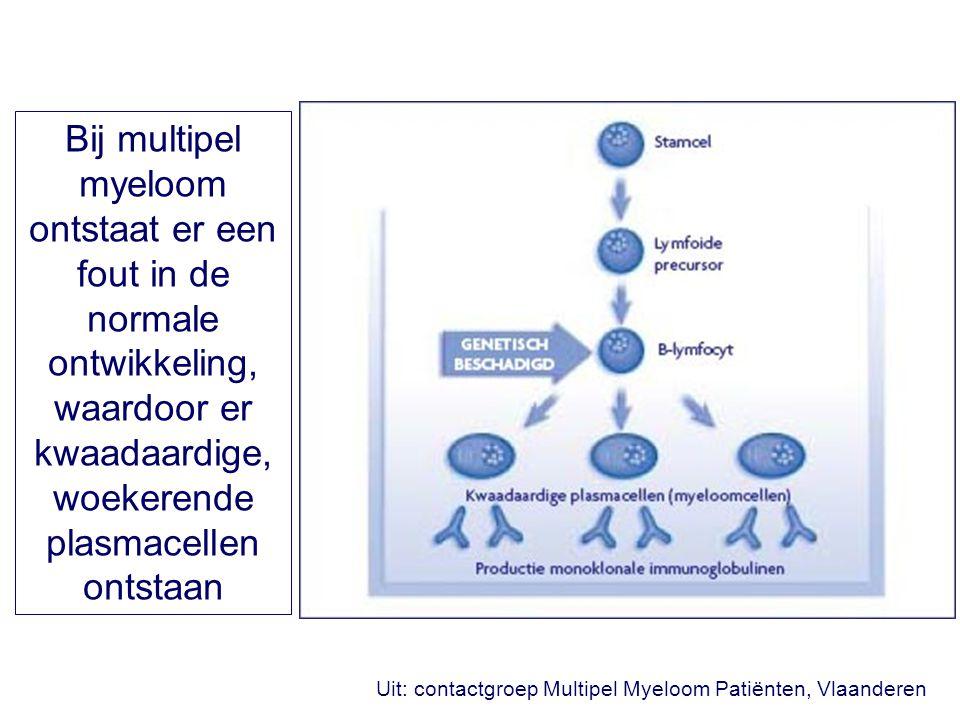 Bij multipel myeloom ontstaat er een fout in de normale ontwikkeling, waardoor er kwaadaardige, woekerende plasmacellen ontstaan