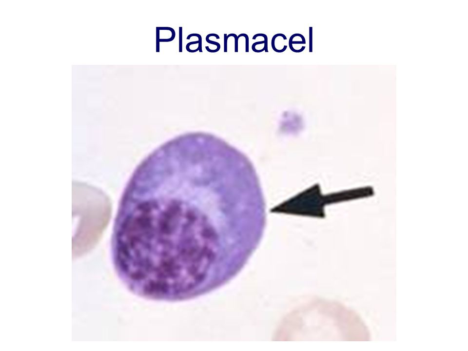 Plasmacel