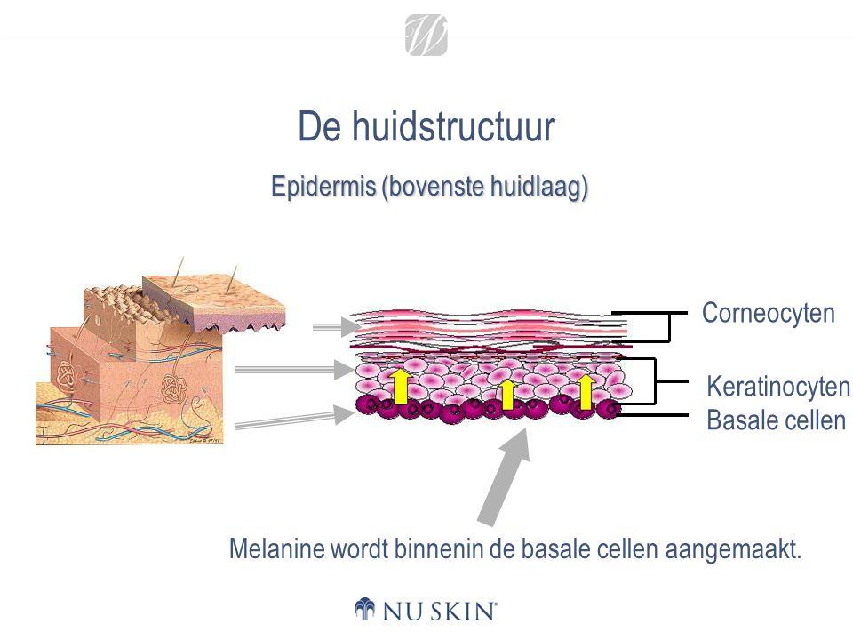 Epidermis (bovenste huidlaag)