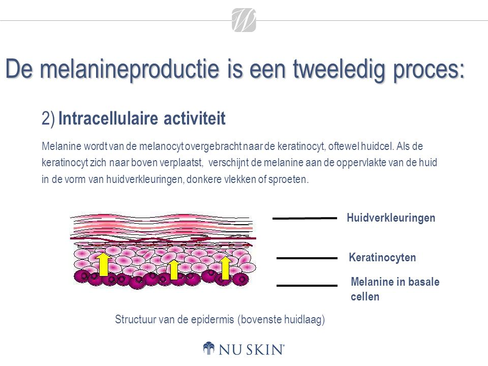 De melanineproductie is een tweeledig proces: