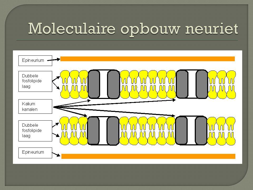 Moleculaire opbouw neuriet