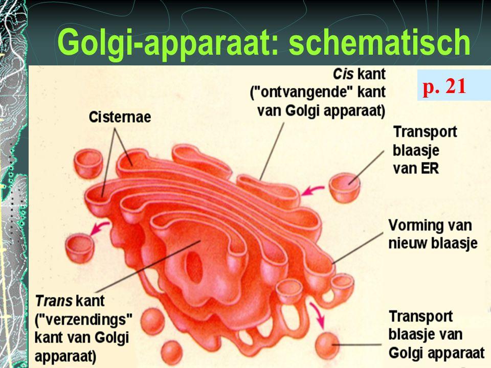 Golgi-apparaat: schematisch