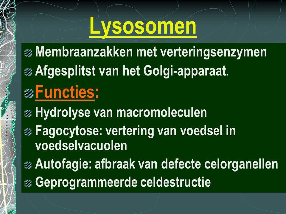 Lysosomen Functies: Membraanzakken met verteringsenzymen