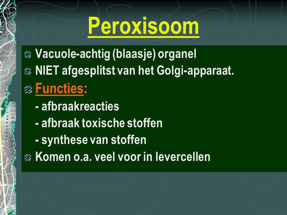 Peroxisoom Functies: Vacuole-achtig (blaasje) organel