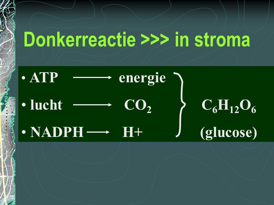 Donkerreactie >>> in stroma