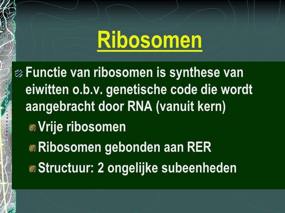 Ribosomen Functie van ribosomen is synthese van eiwitten o.b.v. genetische code die wordt aangebracht door RNA (vanuit kern)