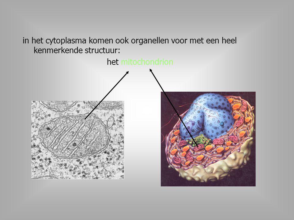 in het cytoplasma komen ook organellen voor met een heel kenmerkende structuur: