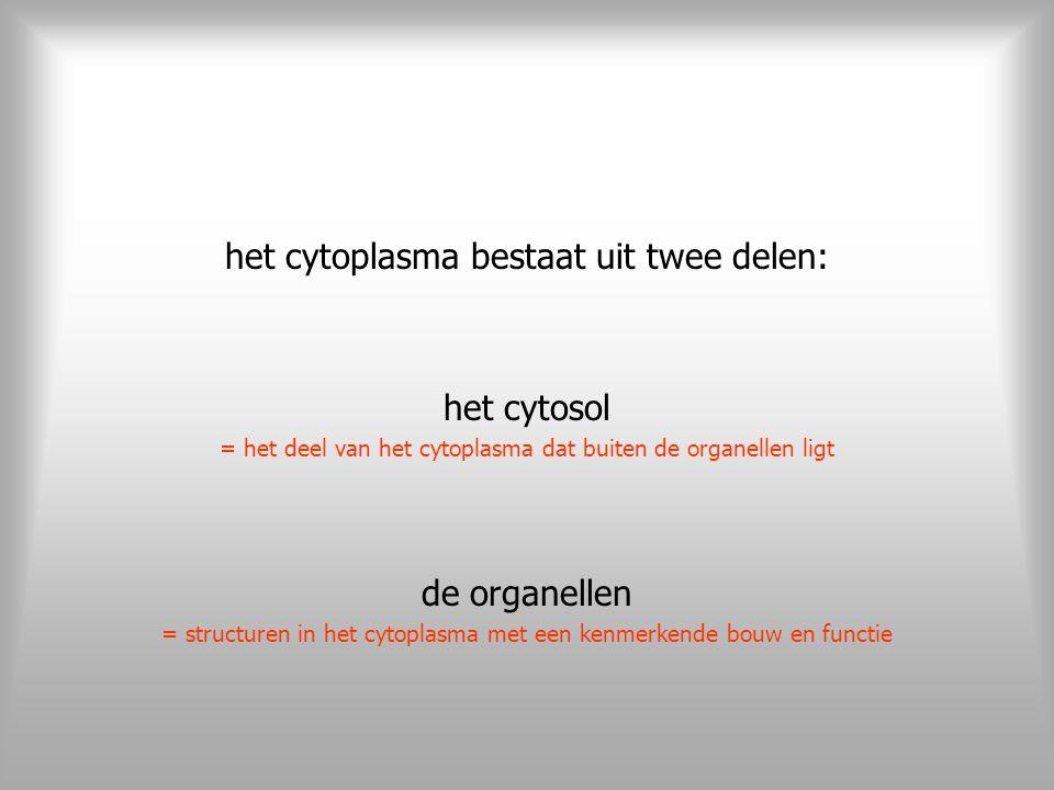 het cytoplasma bestaat uit twee delen: