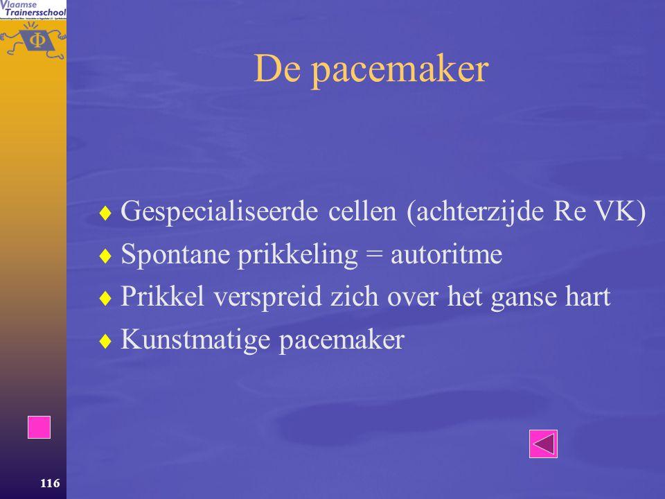 De pacemaker Gespecialiseerde cellen (achterzijde Re VK)