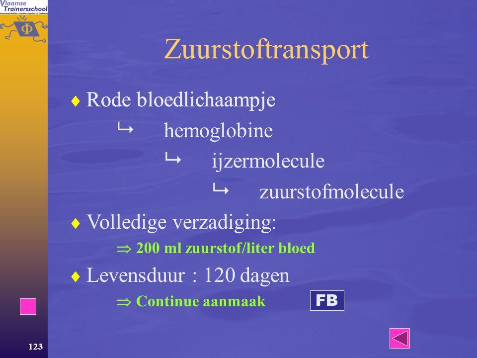 Zuurstoftransport Rode bloedlichaampje  hemoglobine  ijzermolecule