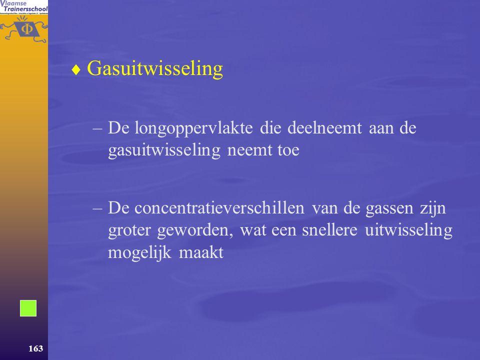 Gasuitwisseling De longoppervlakte die deelneemt aan de gasuitwisseling neemt toe.