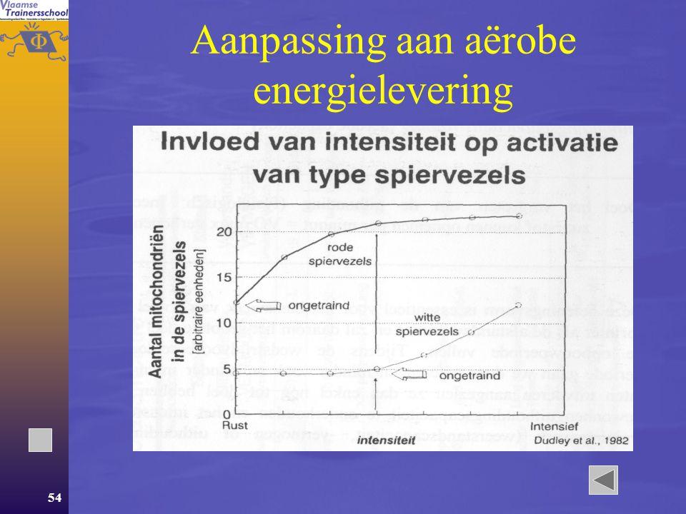 Aanpassing aan aërobe energielevering