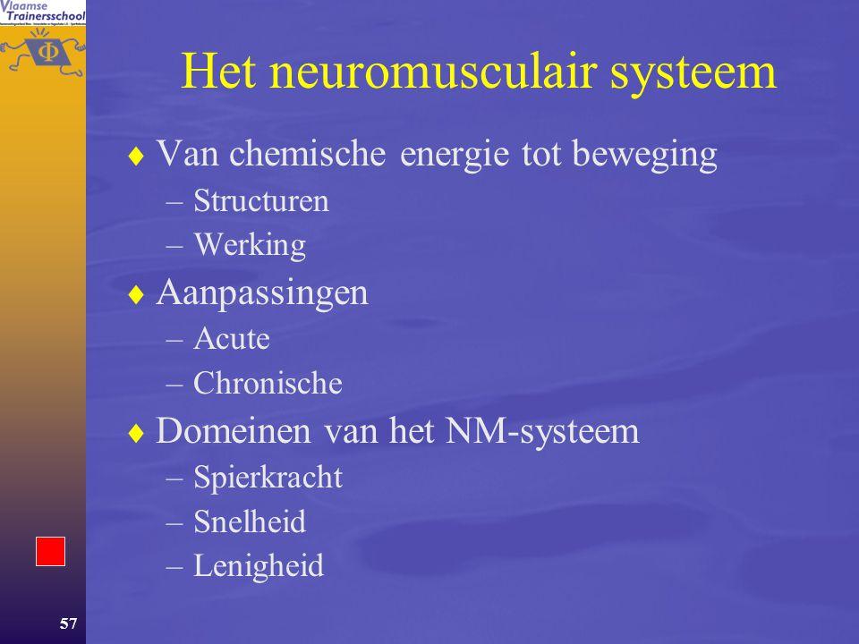 Het neuromusculair systeem