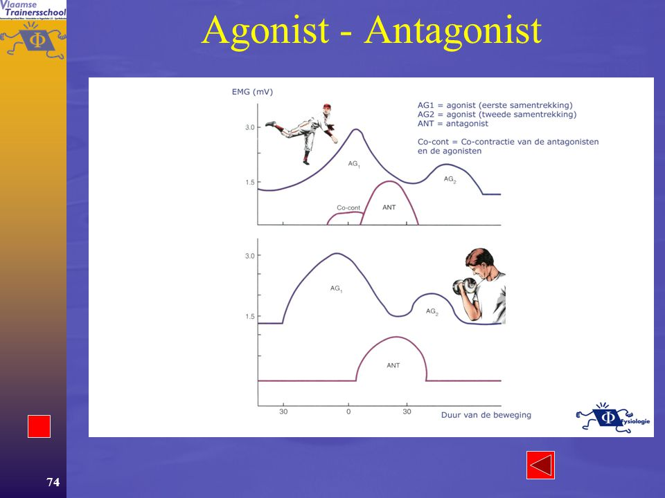 Agonist - Antagonist