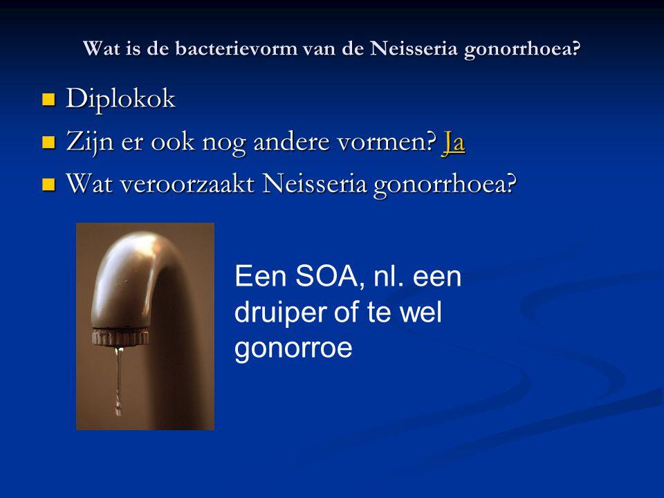 Wat is de bacterievorm van de Neisseria gonorrhoea