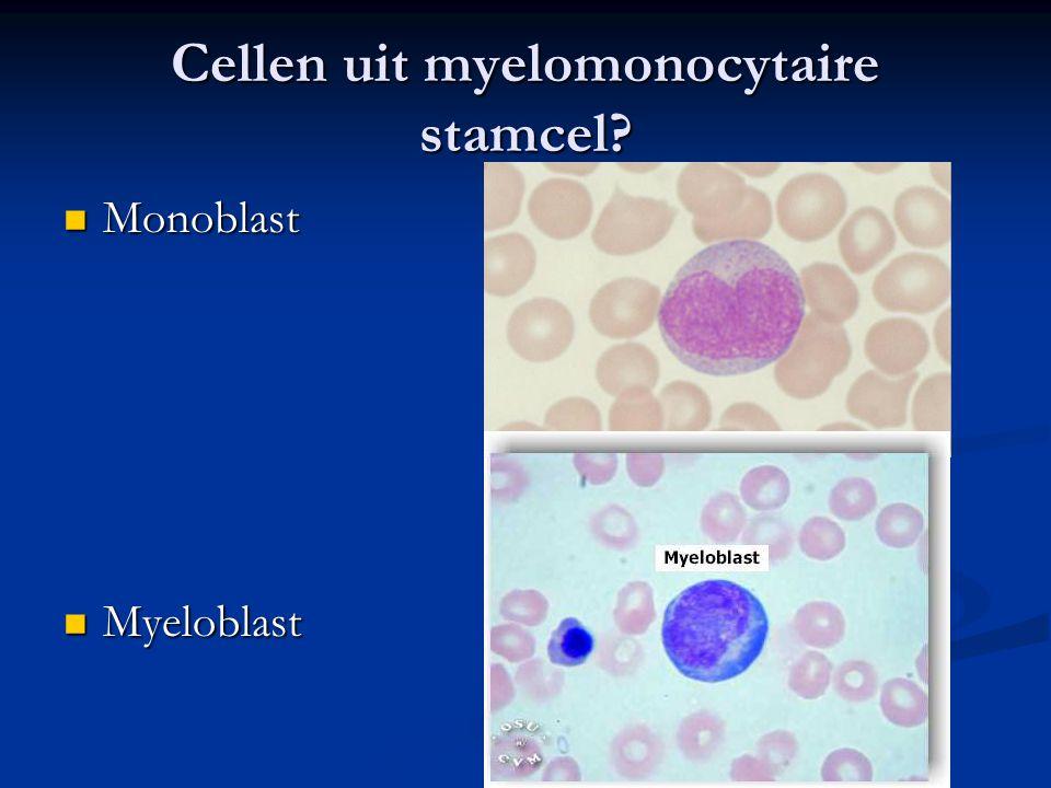 Cellen uit myelomonocytaire stamcel