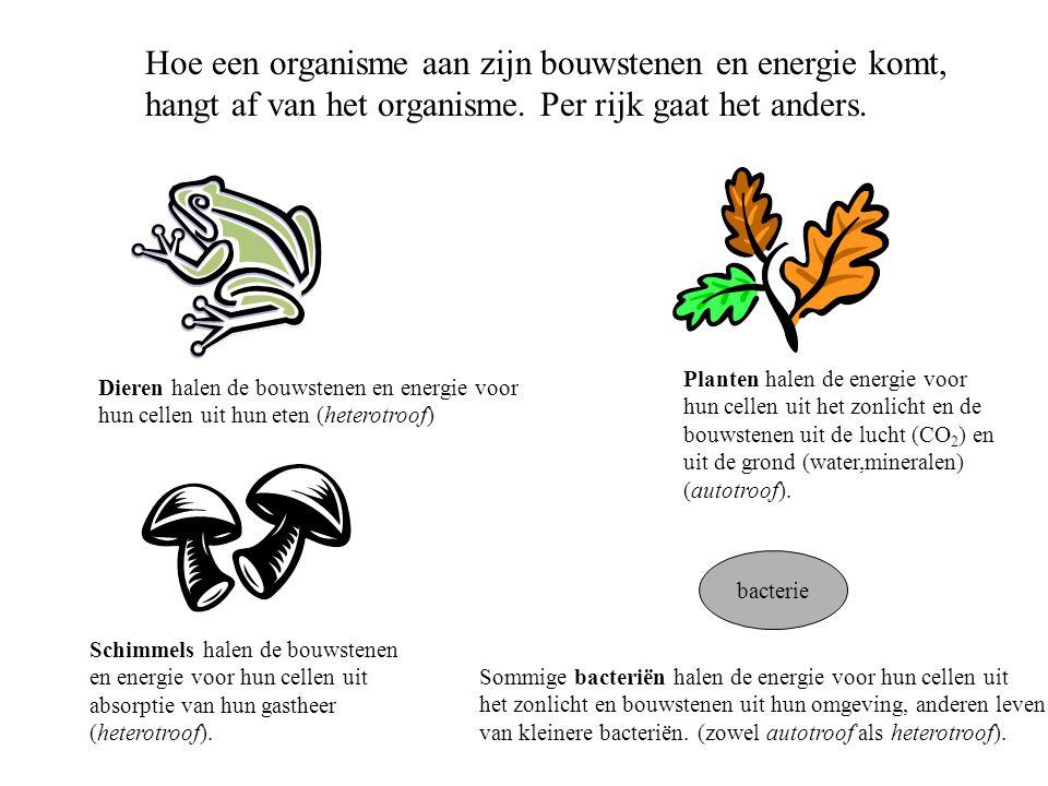 Hoe een organisme aan zijn bouwstenen en energie komt,