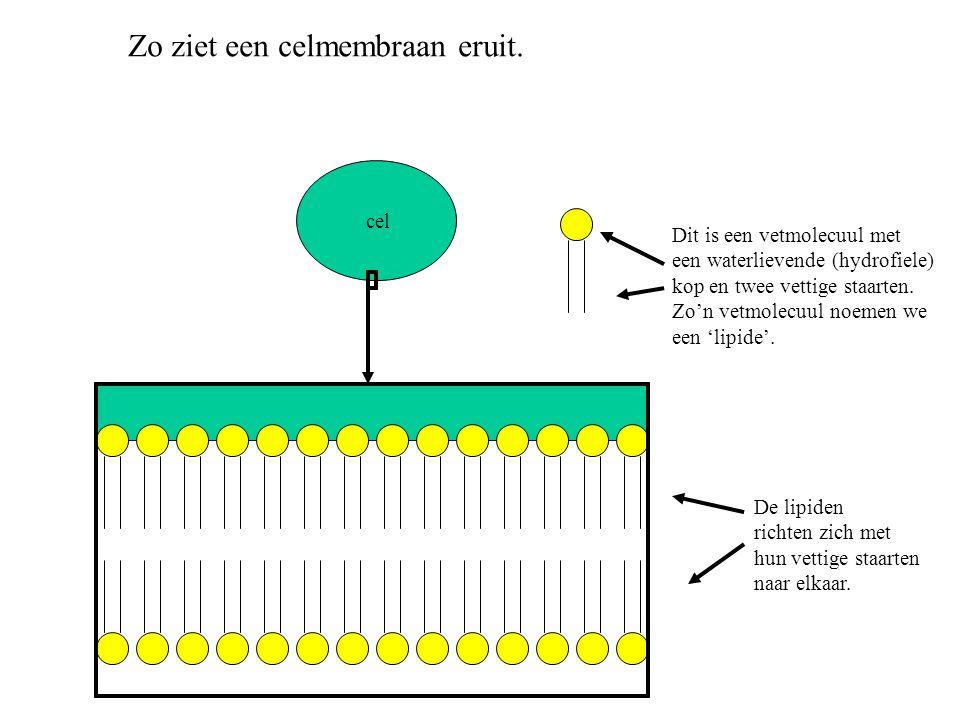 Zo ziet een celmembraan eruit.
