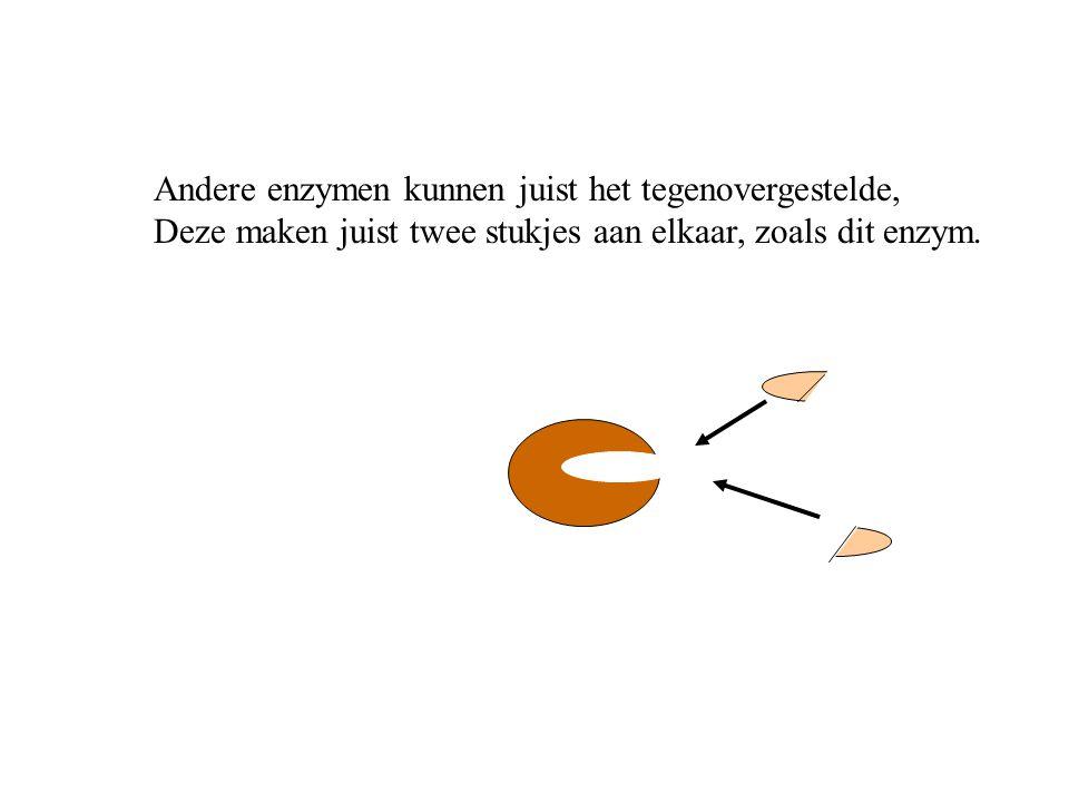 Andere enzymen kunnen juist het tegenovergestelde,