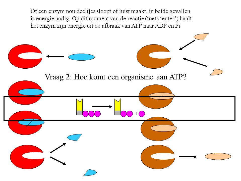 Vraag 2: Hoe komt een organisme aan ATP