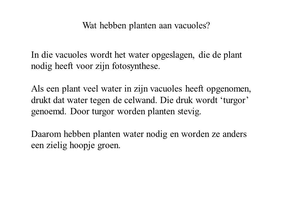 Wat hebben planten aan vacuoles