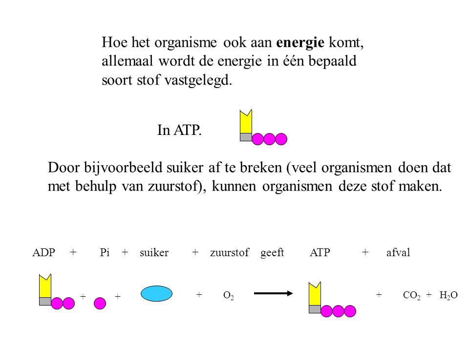Hoe het organisme ook aan energie komt,