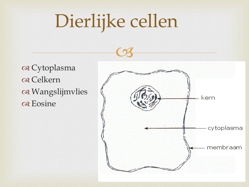 Dierlijke cellen Cytoplasma Celkern Wangslijmvlies Eosine