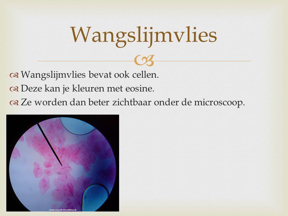 Wangslijmvlies Wangslijmvlies bevat ook cellen.