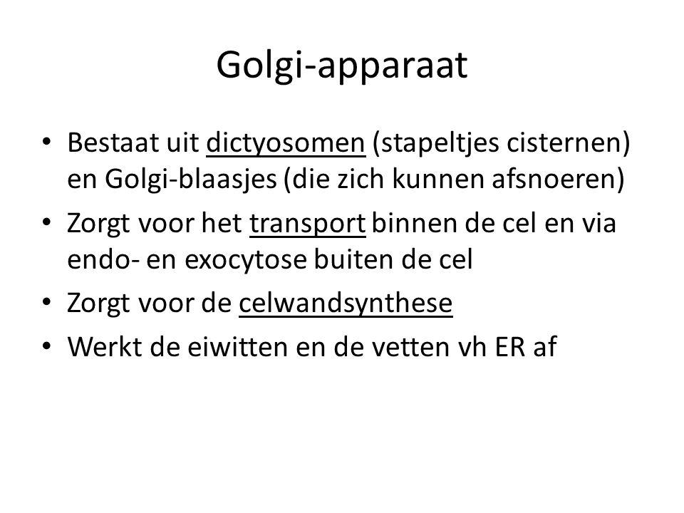 Golgi-apparaat Bestaat uit dictyosomen (stapeltjes cisternen) en Golgi-blaasjes (die zich kunnen afsnoeren)