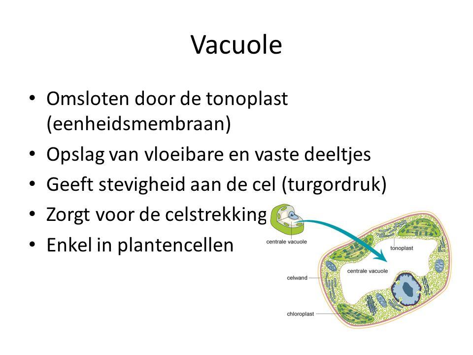 Vacuole Omsloten door de tonoplast (eenheidsmembraan)