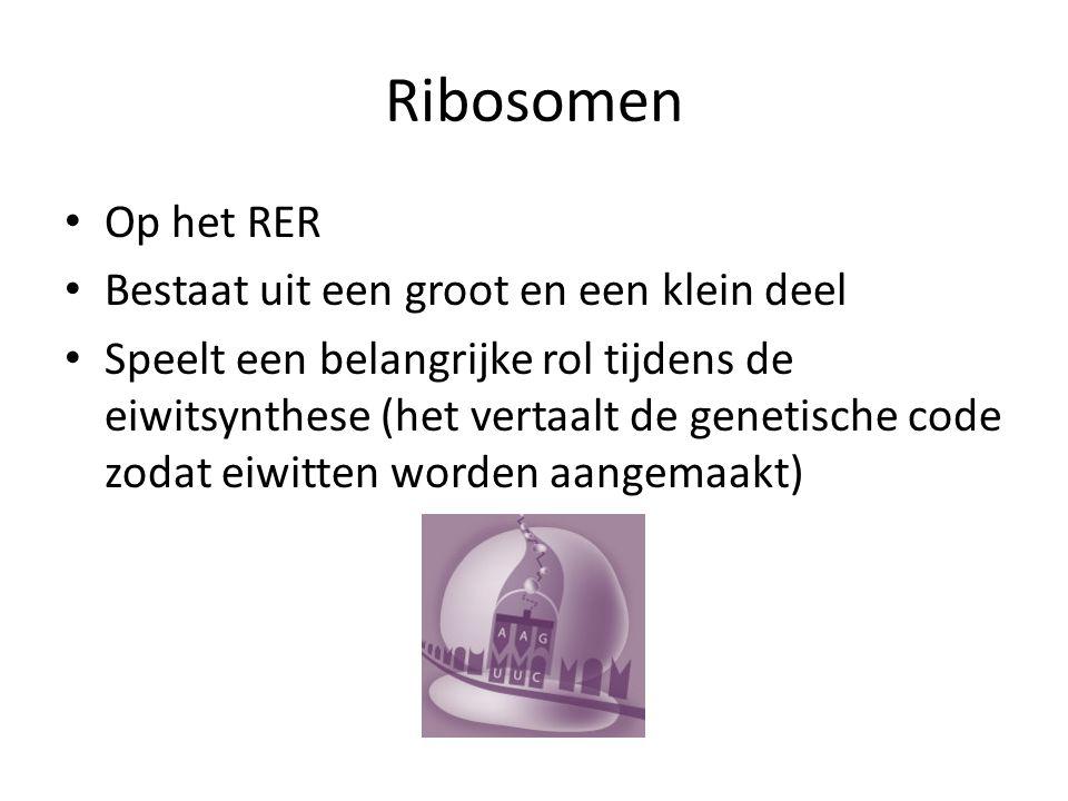 Ribosomen Op het RER Bestaat uit een groot en een klein deel