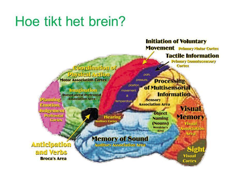 Hoe tikt het brein