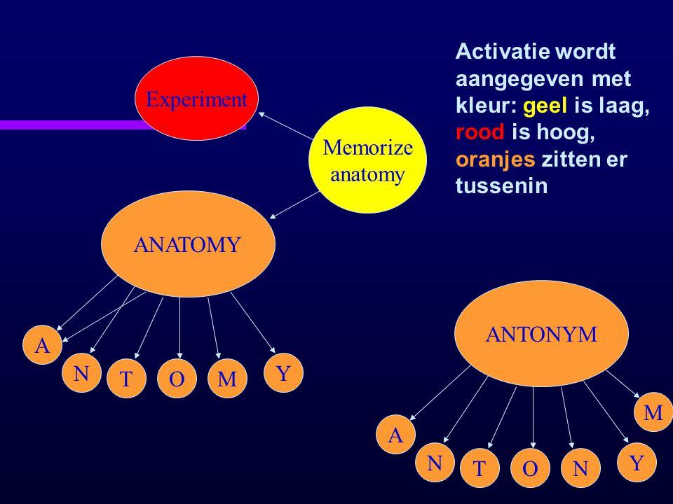 Activatie wordt aangegeven met kleur: geel is laag, rood is hoog, oranjes zitten er tussenin