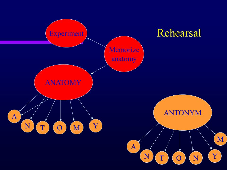 Rehearsal Memorize anatomy Experiment ANATOMY ANTONYM A N T O Y M A N