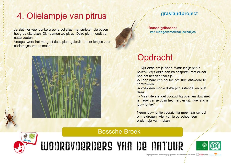 4. Olielampje van pitrus Opdracht graslandproject Bossche Broek
