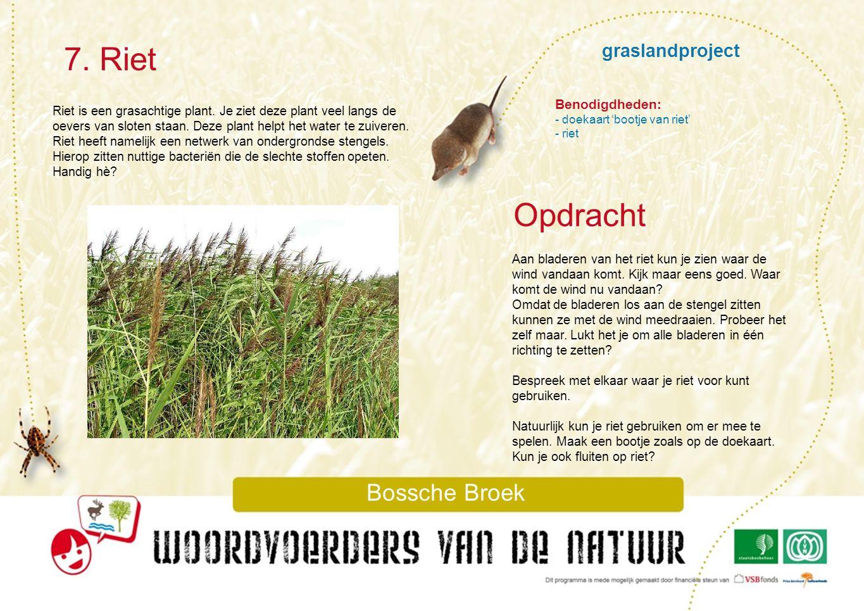 7. Riet Opdracht graslandproject Bossche Broek Benodigdheden: