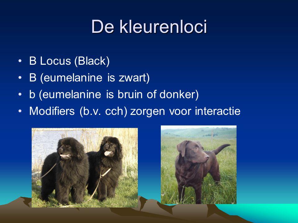 De kleurenloci B Locus (Black) B (eumelanine is zwart)