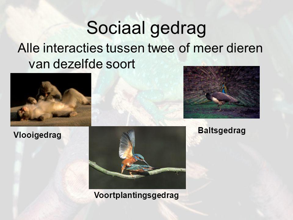 Sociaal gedrag Alle interacties tussen twee of meer dieren van dezelfde soort. Baltsgedrag. Vlooigedrag.
