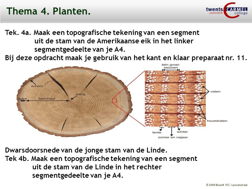 Thema 4. Planten. Tek. 4a. Maak een topografische tekening van een segment. uit de stam van de Amerikaanse eik in het linker.