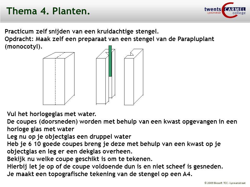 Thema 4. Planten. Practicum zelf snijden van een kruidachtige stengel.