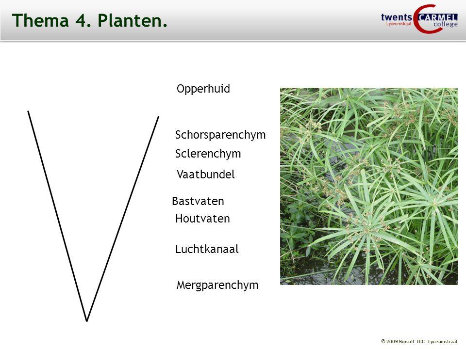 Thema 4. Planten. Opperhuid Schorsparenchym Sclerenchym Vaatbundel