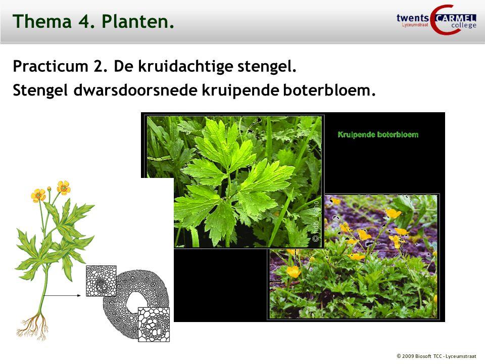 Thema 4. Planten. Practicum 2. De kruidachtige stengel.