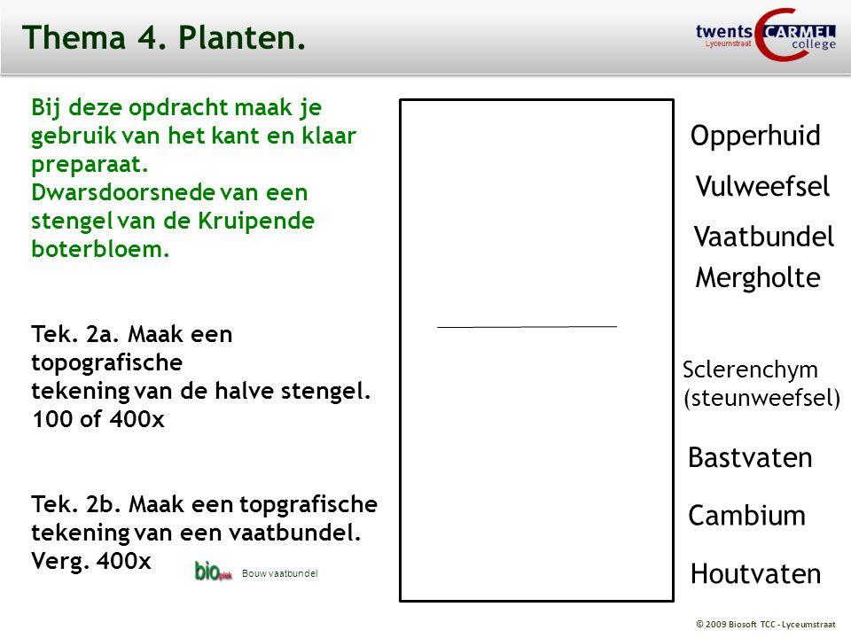 Thema 4. Planten. Opperhuid Vulweefsel Vaatbundel Mergholte Bastvaten