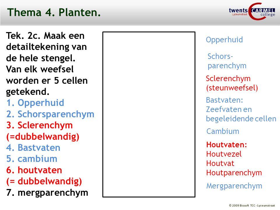 Thema 4. Planten. Tek. 2c. Maak een detailtekening van