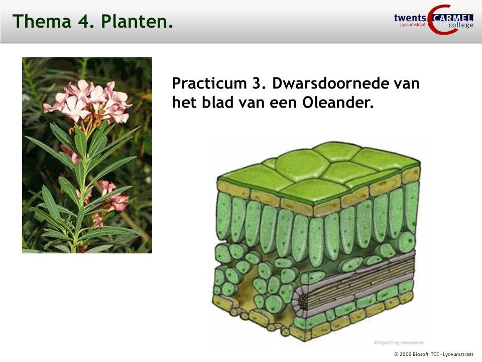 Thema 4. Planten. Practicum 3. Dwarsdoornede van het blad van een Oleander.